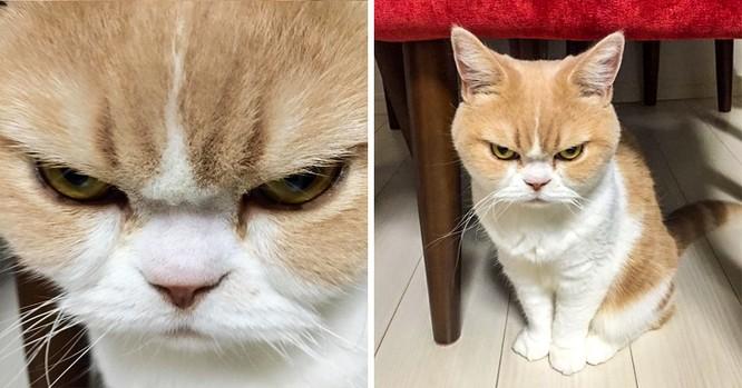 15 hình ảnh chứng minh mèo là loài khó tính nhất hành tinh ảnh 3