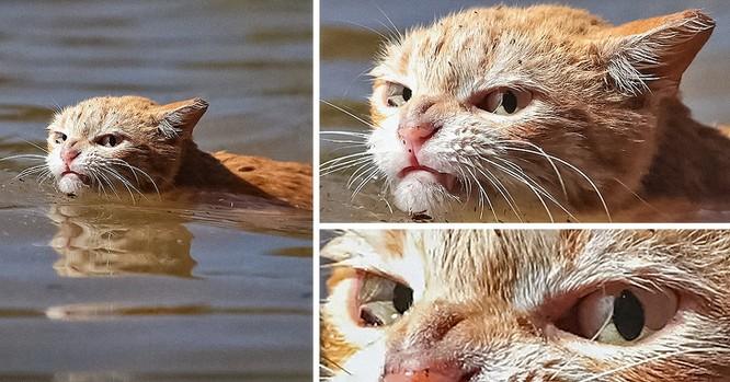 15 hình ảnh chứng minh mèo là loài khó tính nhất hành tinh ảnh 1