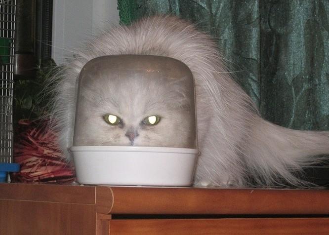 15 hình ảnh chứng minh mèo là loài khó tính nhất hành tinh ảnh 13