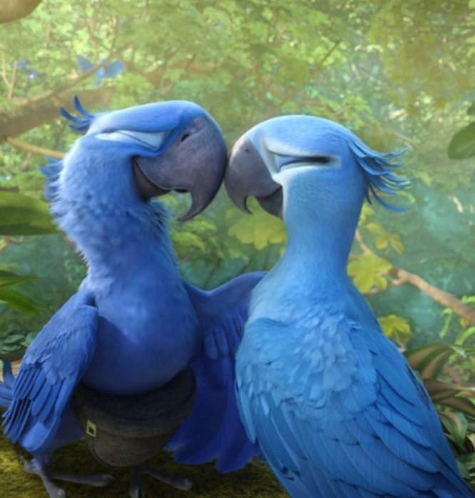 Vẹt xanh đuôi dài của loạt phim hoạt hình 'Rio' đã tuyệt chủng ảnh 2