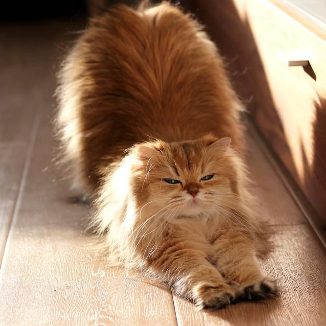 Chùm ảnh đáng yêu của loài mèo giúp bạn đánh bay mọi muộn phiền ảnh 11