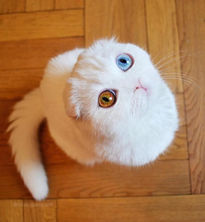 Chùm ảnh đáng yêu của loài mèo giúp bạn đánh bay mọi muộn phiền ảnh 15