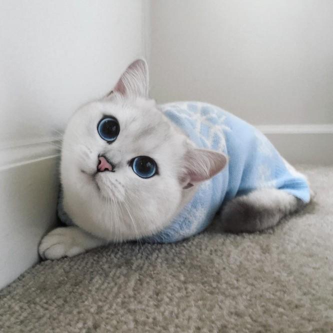 Chùm ảnh đáng yêu của loài mèo giúp bạn đánh bay mọi muộn phiền ảnh 2