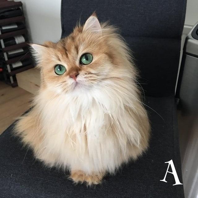 Chùm ảnh đáng yêu của loài mèo giúp bạn đánh bay mọi muộn phiền ảnh 3