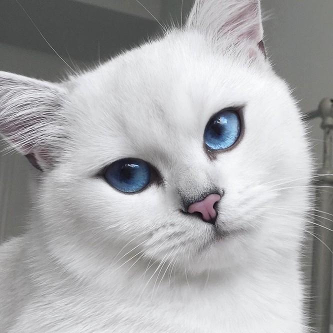 Chùm ảnh đáng yêu của loài mèo giúp bạn đánh bay mọi muộn phiền ảnh 5
