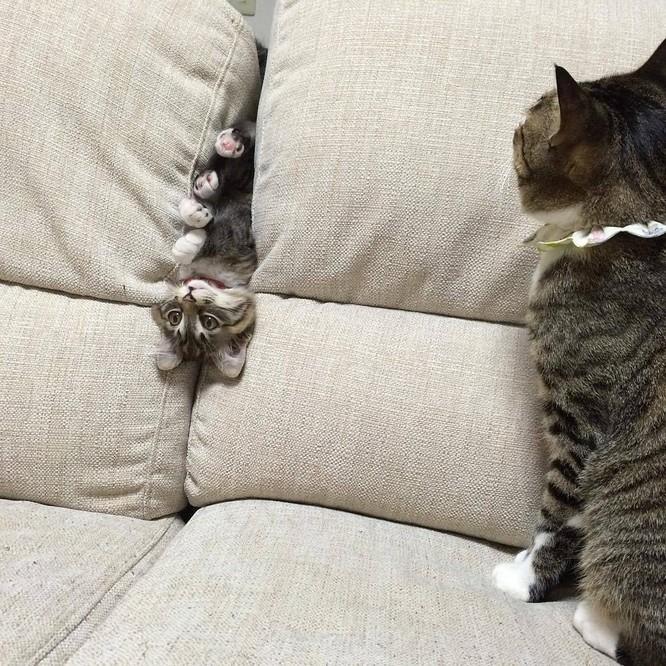 Chùm ảnh đáng yêu của loài mèo giúp bạn đánh bay mọi muộn phiền ảnh 7