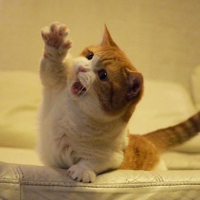 Chùm ảnh đáng yêu của loài mèo giúp bạn đánh bay mọi muộn phiền ảnh 6