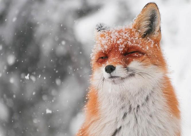 15 hình ảnh động vật trong mùa đông khiến trái tim ai cũng phải tan chảy ảnh 13