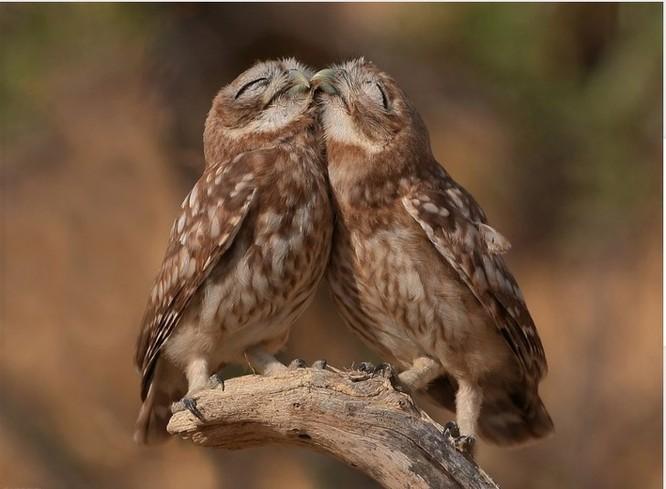 15 khoảnh khắc chứng tỏ động vật cũng tồn tại những tình yêu mãnh liệt ảnh 2