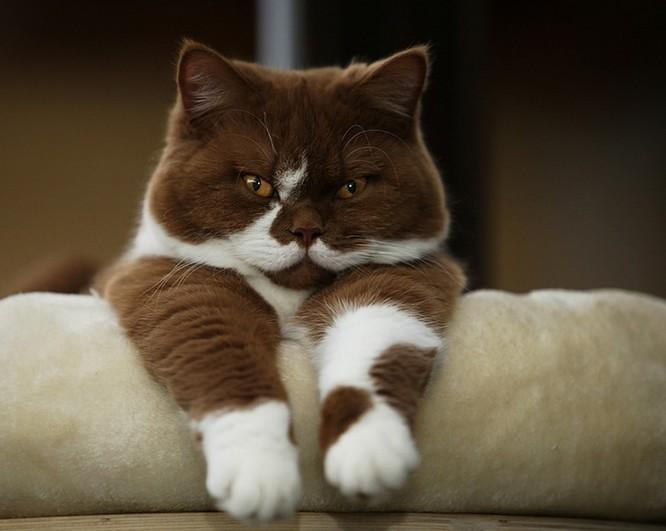 Chùm ảnh đáng yêu của loài mèo giúp bạn đánh bay mọi muộn phiền ảnh 1