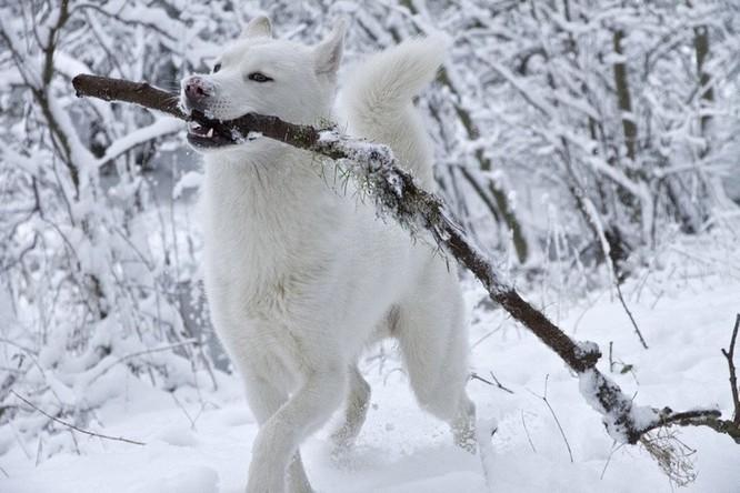 15 hình ảnh động vật trong mùa đông khiến trái tim ai cũng phải tan chảy ảnh 12