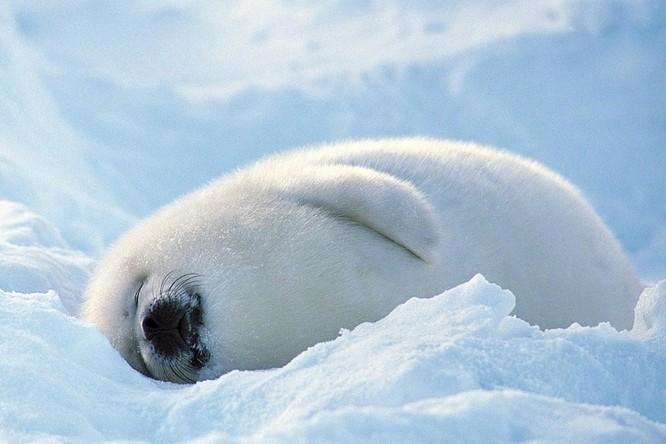 15 hình ảnh động vật trong mùa đông khiến trái tim ai cũng phải tan chảy ảnh 8