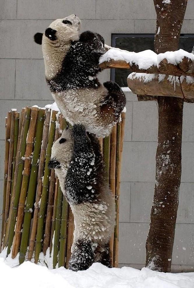15 hình ảnh động vật trong mùa đông khiến trái tim ai cũng phải tan chảy ảnh 7