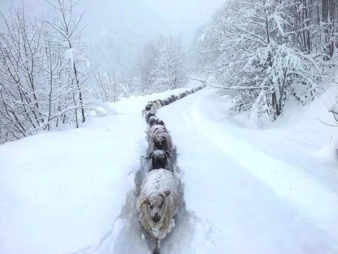 15 hình ảnh động vật trong mùa đông khiến trái tim ai cũng phải tan chảy ảnh 5