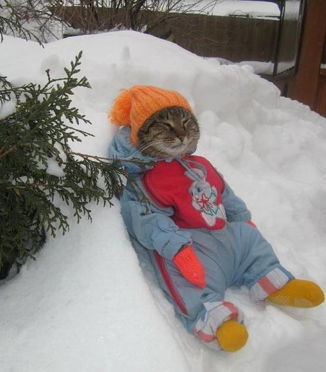 15 hình ảnh động vật trong mùa đông khiến trái tim ai cũng phải tan chảy ảnh 3