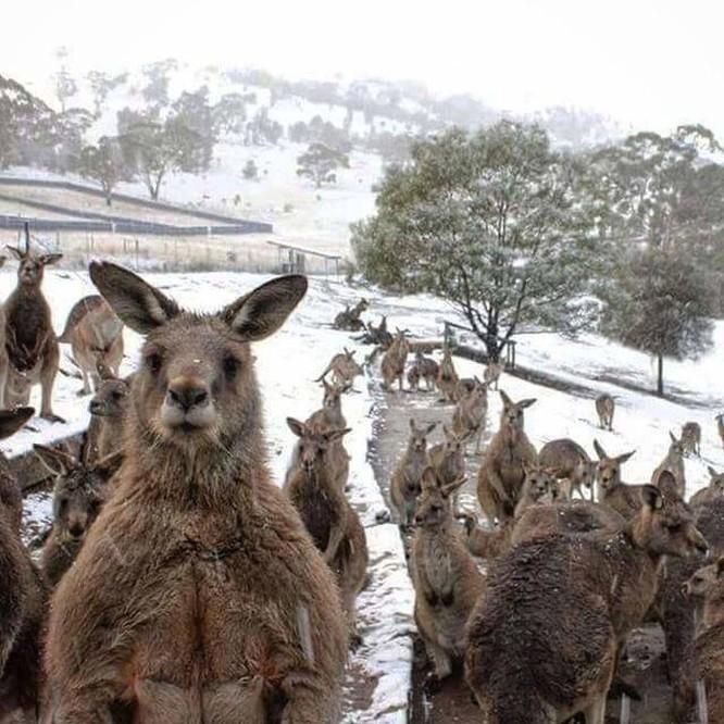 15 hình ảnh động vật trong mùa đông khiến trái tim ai cũng phải tan chảy ảnh 2