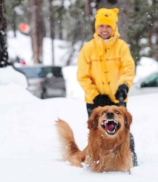 15 hình ảnh động vật trong mùa đông khiến trái tim ai cũng phải tan chảy ảnh 6