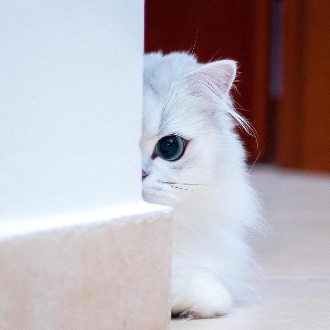 Chùm ảnh đáng yêu của loài mèo giúp bạn đánh bay mọi muộn phiền ảnh 8