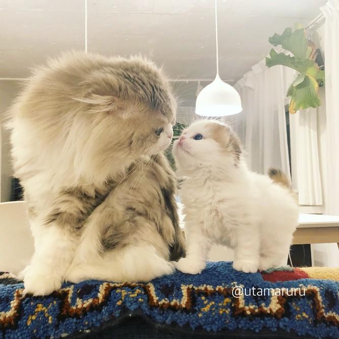 Chùm ảnh đáng yêu của loài mèo giúp bạn đánh bay mọi muộn phiền ảnh 9