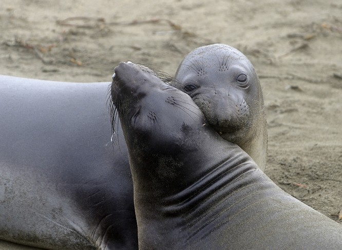 """Kết quả hình ảnh cho ANIMALS 20 Animal Couples That Prove Love Does Exist By 5FUNFACTS November 8, 2018 No Comments Share Tweet Google+ + True love does exist. From a pair of butterflies to a couple of gorgeous penguins, the animal kingdom gives us amazing examples of heartfelt, inseparable couples who show us that """"happily ever after"""" is not just a fairytale. You just can't deny the magic and power of love when you look at this. 5 Fun Facts has put together a compilation of stunning images which display love in its truest form. Scroll down at your own risk — they're likely to melt your heart. 1. These adorable parrots look absolutely gorgeous together! 2. A sweet moment shared by a lynx couple…this will make anyone's heart melt. 3. Nothing like an evening by the lake with the one you love…especially for a swan! 4. This lion couple shows us that love is about seeing a whole new world together, even with your eyes closed. © Giuseppina Vitalia / Fauna Image 5. A loving snuggle is """"owl"""" you need in life. © Judah Zada / One Big Photo 6. A butterfly couple sharing the sweet nectar of love. 7. A snow leopard's version of """"kiss and make up"""" 8. An earnest hug is the best way to say """"I love you."""" 9. Flamingos don't need to struggle to prove their love — by just looking into each other's eyes they create the shape of a """"heart"""" between them! 10. A romantic kiss shared by a black-browed albatross couple 11. Having a shoulder to lean on…now that's what love is all about"""