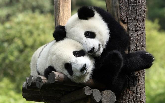 animal-couples-4