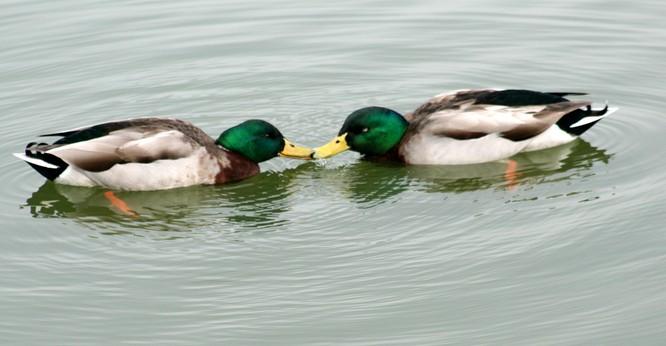 Kết quả hình ảnh cho 20-animal-couples-that-prove-love-does-exist