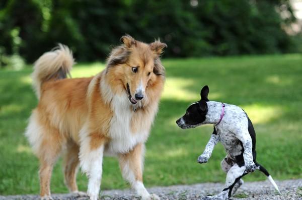 Kết quả hình ảnh cho chú chó ghen tị