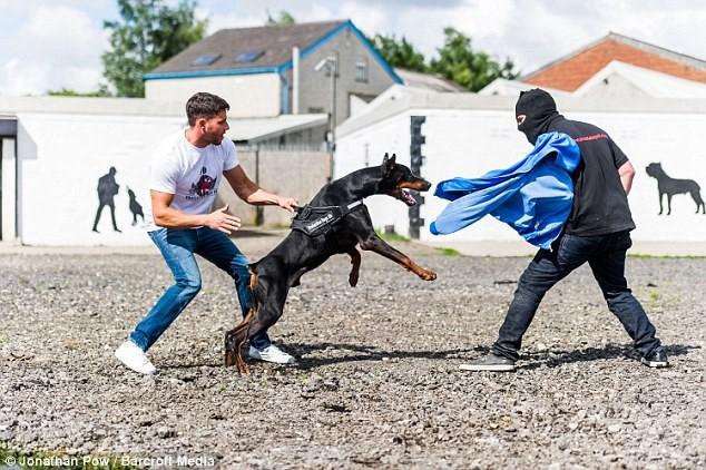 Kết quả hình ảnh cho chó bảo vệ chủ