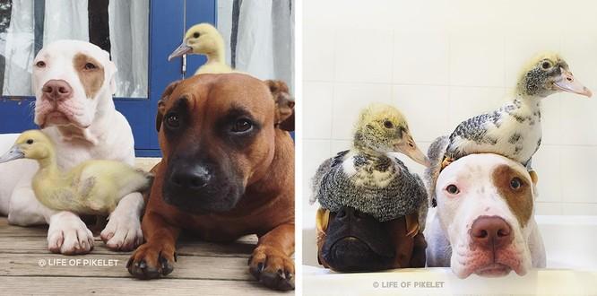 Chùm ảnh ngọt ngào của những cặp đôi thú cưng lớn lên cùng nhau ảnh 14
