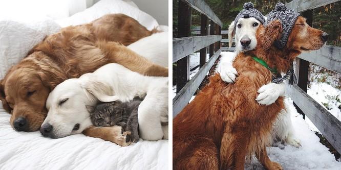 Chùm ảnh ngọt ngào của những cặp đôi thú cưng lớn lên cùng nhau ảnh 13