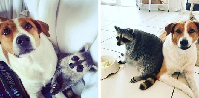 Chùm ảnh ngọt ngào của những cặp đôi thú cưng lớn lên cùng nhau ảnh 9