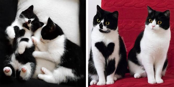 Chùm ảnh ngọt ngào của những cặp đôi thú cưng lớn lên cùng nhau ảnh 8