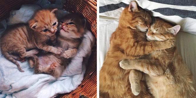 Chùm ảnh ngọt ngào của những cặp đôi thú cưng lớn lên cùng nhau ảnh 7