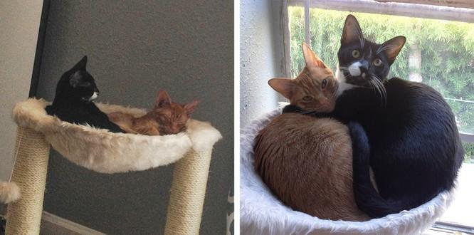 Chùm ảnh ngọt ngào của những cặp đôi thú cưng lớn lên cùng nhau ảnh 4