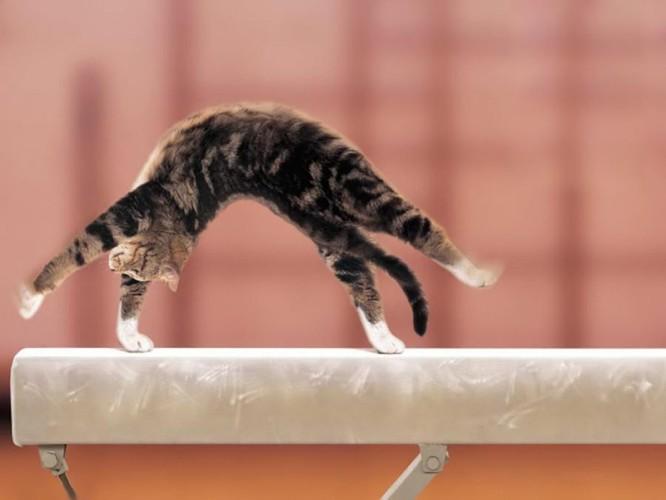 Hình ảnh chú mèo thể dục