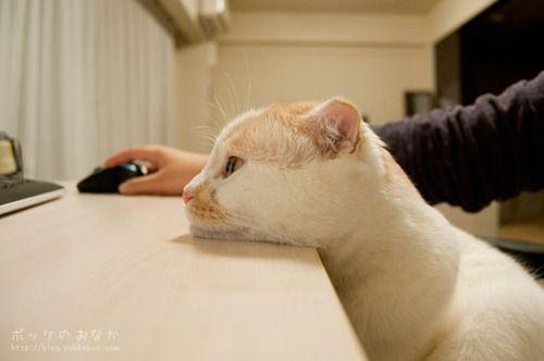 Hình ảnh sĩAªu chán mèo