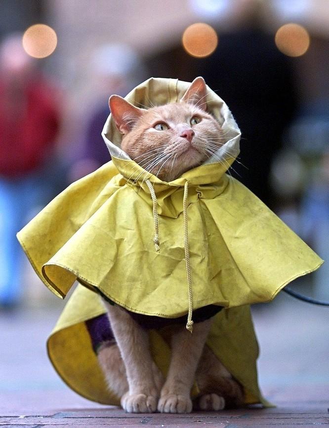 Áo mưa hình ảnh Kitty