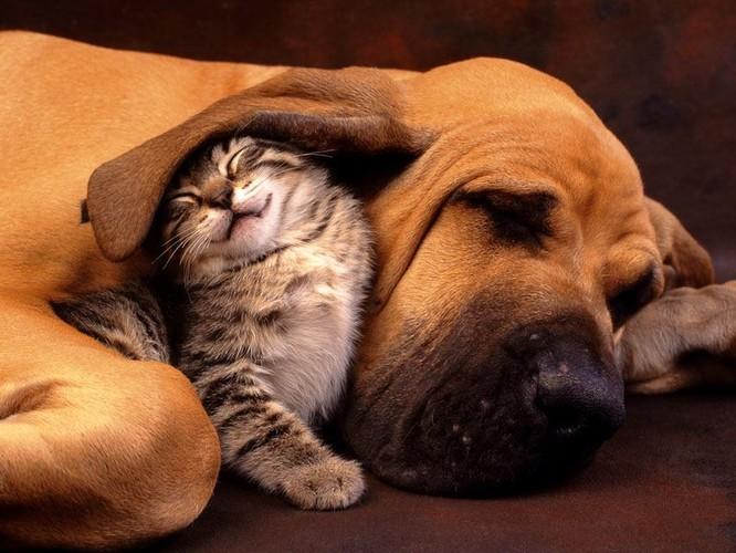 Hình ảnh bạn mèo và chó dễ thương
