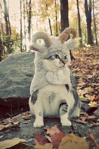 Hình ảnh con mèo phĩAªu lÆ°u
