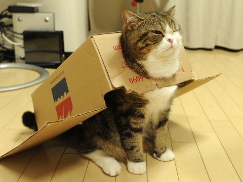 Hình ảnh sĩAªu anh hùng mèo dễ thÆ°Æ¡ng