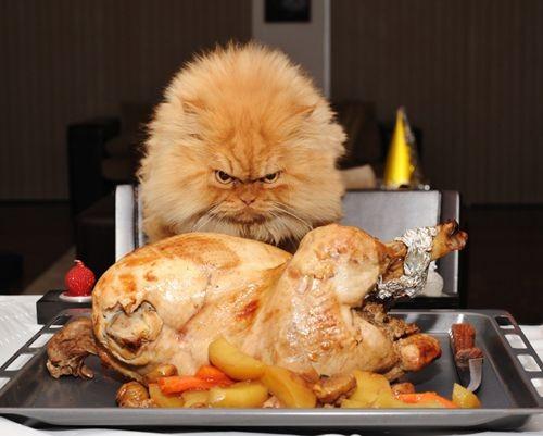 Hình ảnh con mèo cực kỳ đói