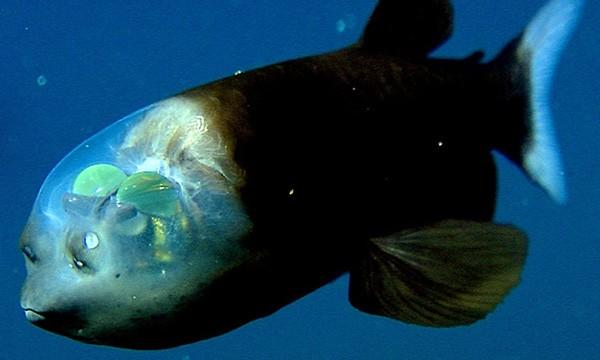 Top 10 quái vật biển đáng sợ nhất hành tinh ảnh 3