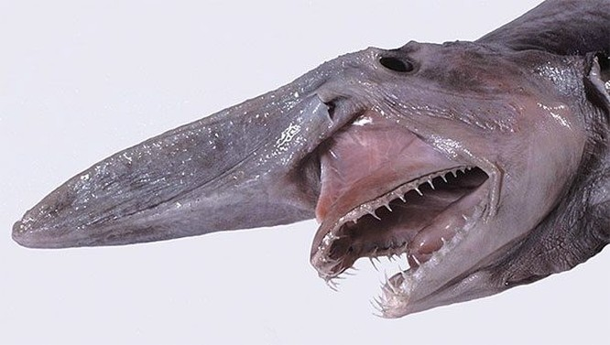Top 10 quái vật biển đáng sợ nhất hành tinh ảnh 9