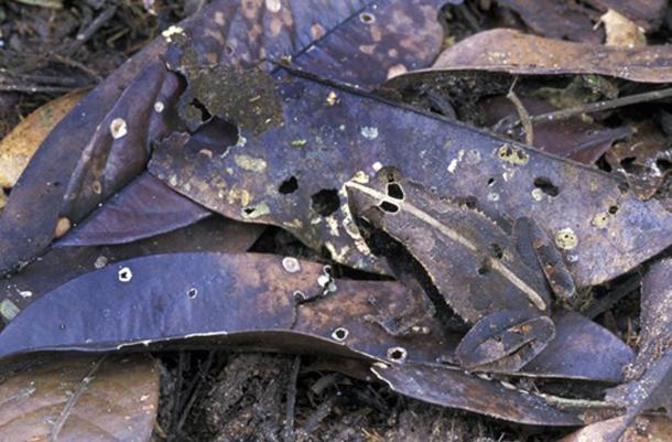 Khả năng ngụy trang đáng kinh ngạc của động vật mà chúng ta chưa biết ảnh 1