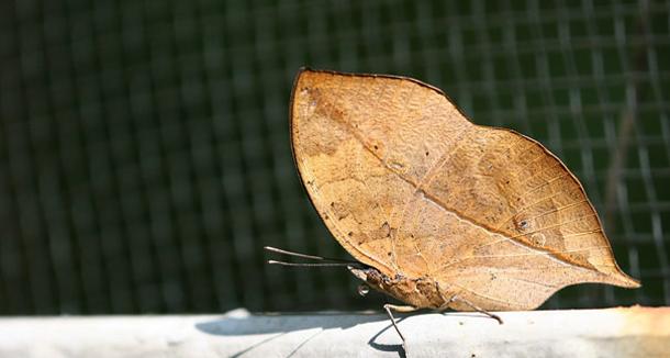 Khả năng ngụy trang đáng kinh ngạc của động vật mà chúng ta chưa biết ảnh 5
