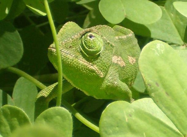 Khả năng ngụy trang đáng kinh ngạc của động vật mà chúng ta chưa biết ảnh 15
