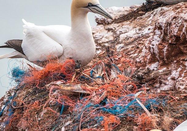 Sự thật đáng sợ về ô nhiễm nhựa - Đã đến lúc chúng ta cần phải thay đổi thói quen ngay lập tức ảnh 4