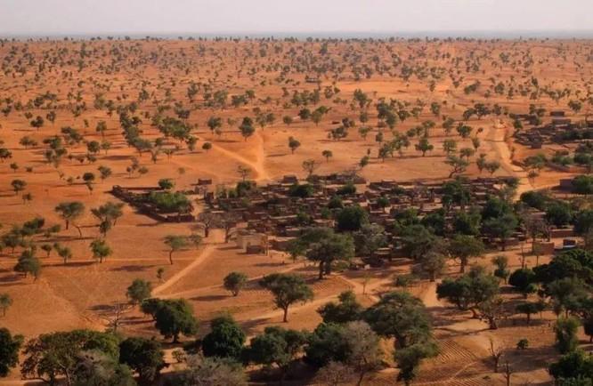 Bạn có biết sa mạc Sahara từng có cây cối xanh rờn với hươu cao cổ và cá sấu? ảnh 4