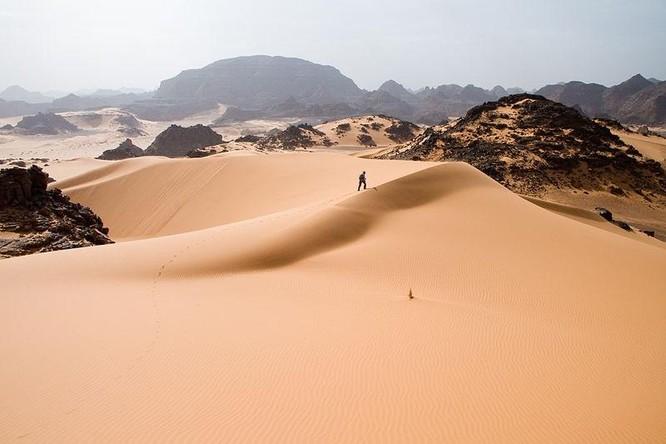 Bạn có biết sa mạc Sahara từng có cây cối xanh rờn với hươu cao cổ và cá sấu? ảnh 1