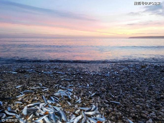 Sau trận động đất, cá chết hàng loạt xuất hiện ở bờ biển của Nhật Bản, chuyện gì sắp xảy ra? ảnh 2